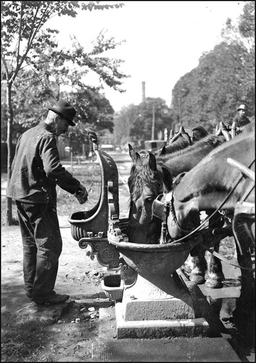 Horses at Drinking Fountain