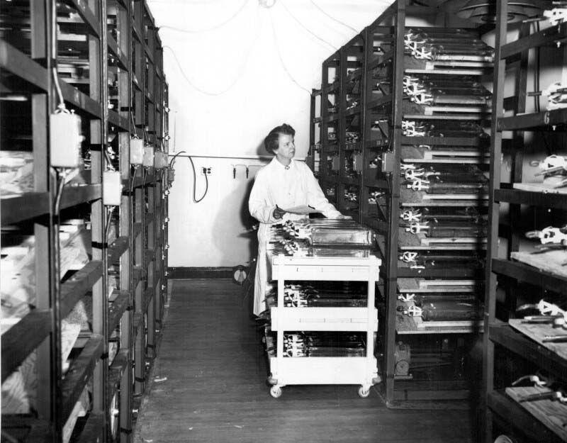 Dr. Leone Farrell in the Laboratory