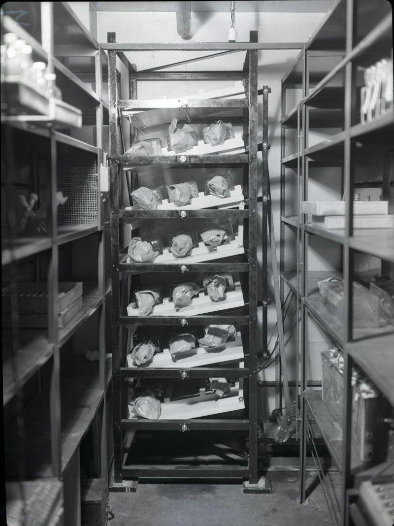 Vaccine Production