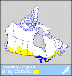 Grey Catbird Distribution