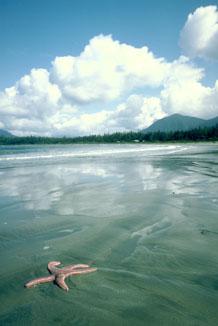 Réserve de parc national Pacific Rim
