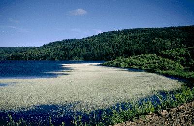 Reeser Lake