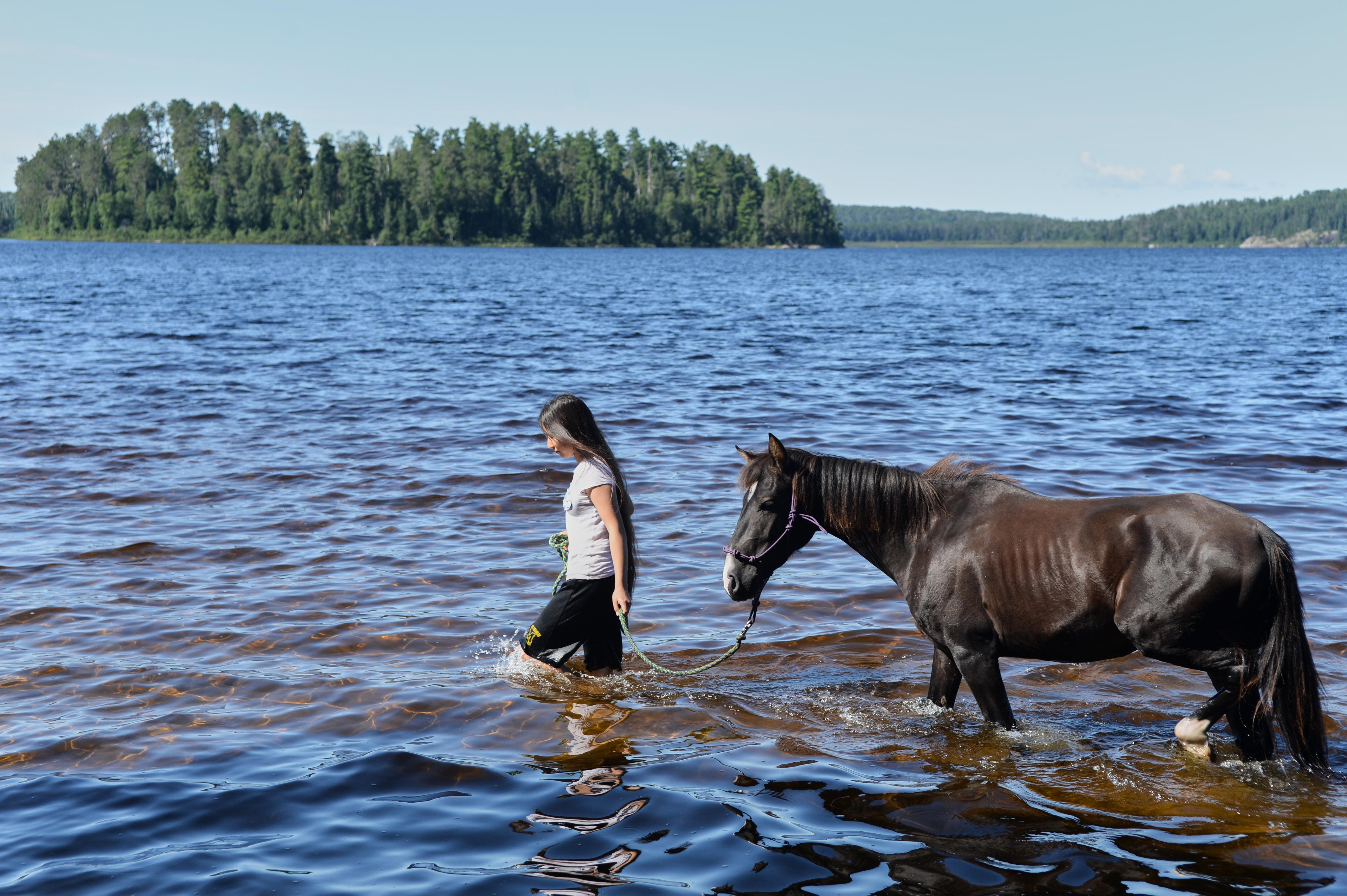 Lac La Croix Indigenous Pony