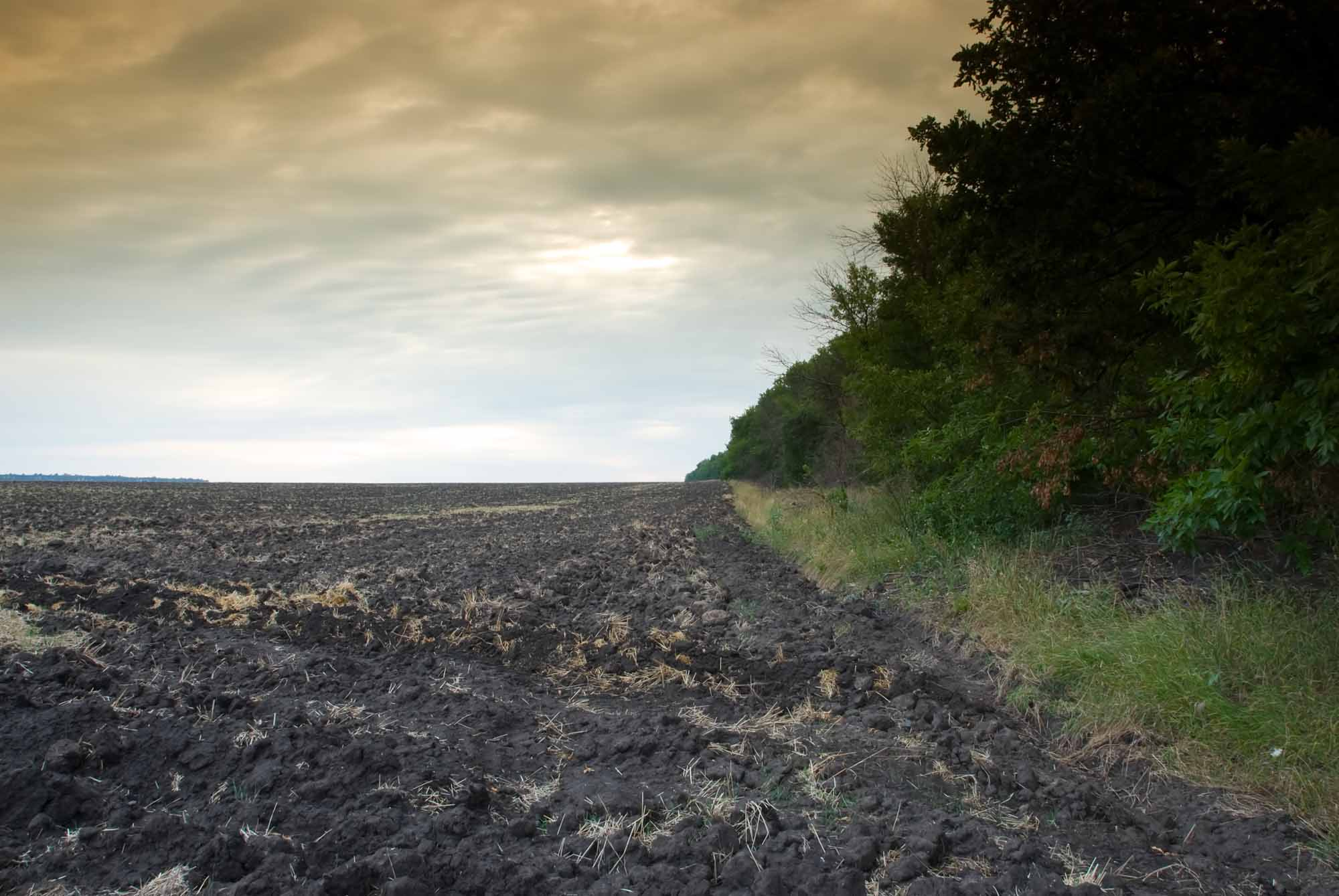 Fallow farming field