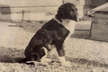 Marjorie the Dog