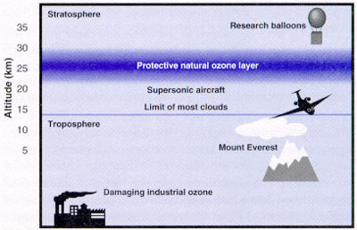Vertical Distribution of Ozone