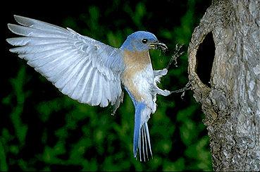 Bluebird Landing