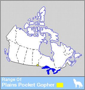 Plains Pocket Gopher Distribution