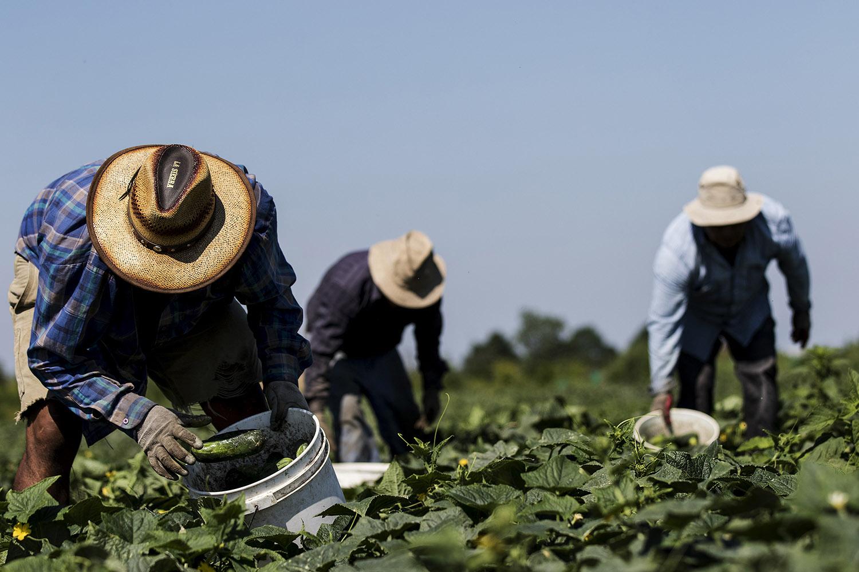 Le travailleur agricole sur les fermes Sunshines, Aristeo Perez Garcia