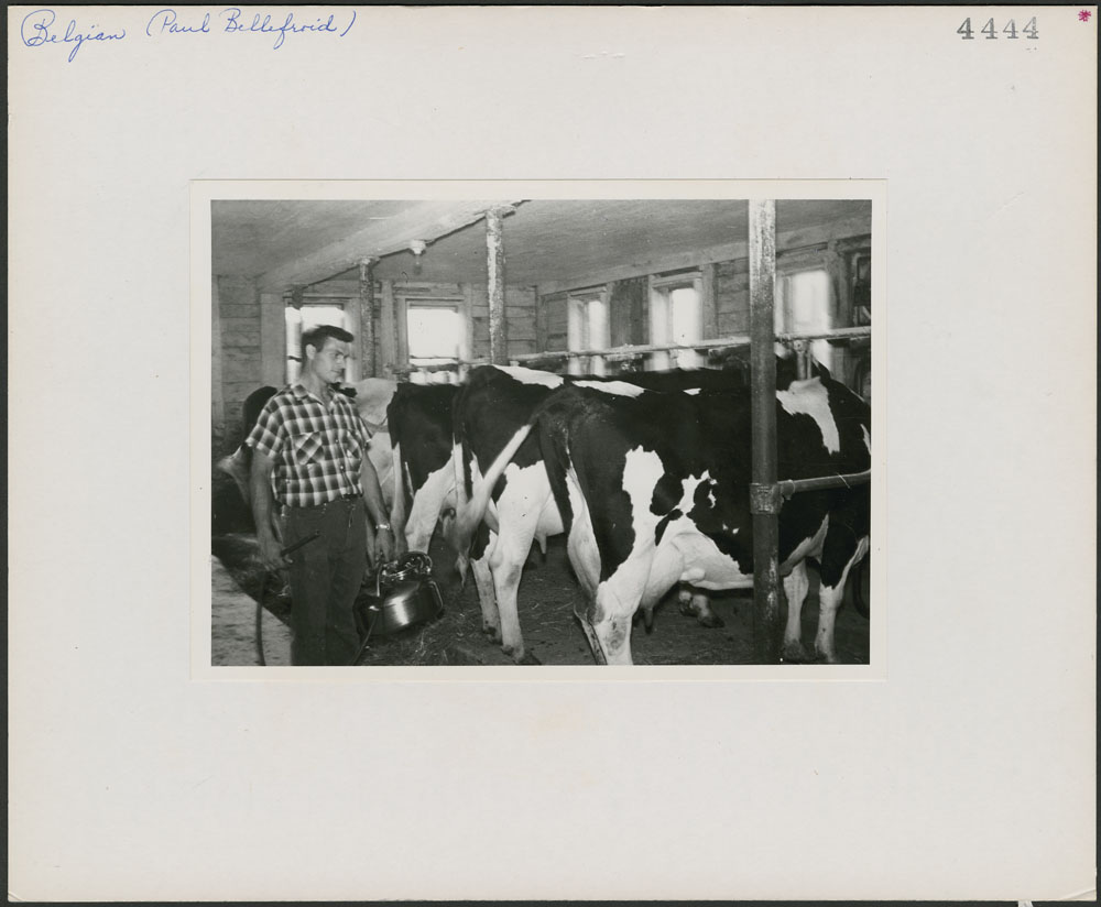 Paul Bellefroid qui fait la traite de vaches sur sa ferme à Pike River, dans le comté de Missiquoi (Québec)