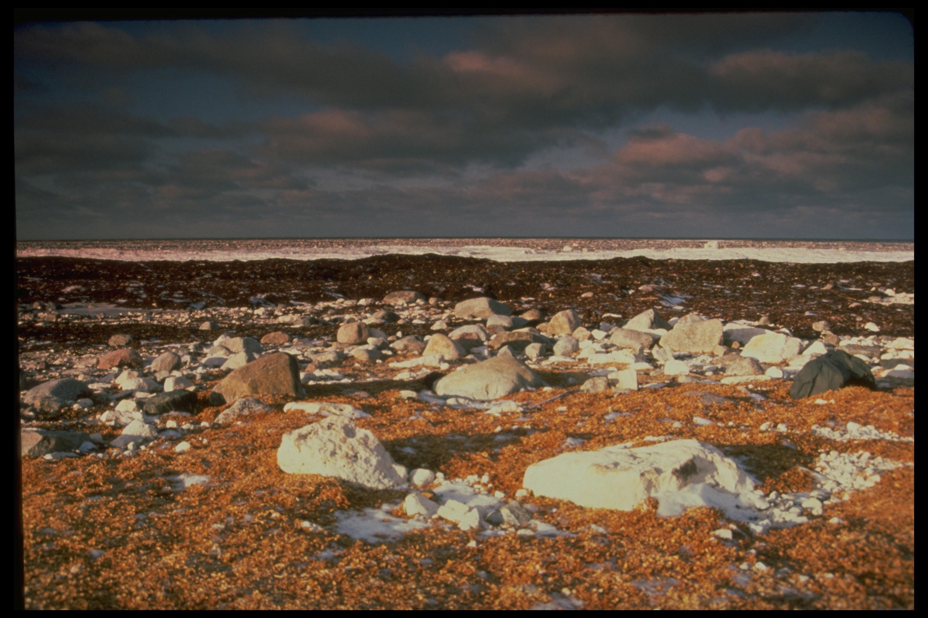 Toundra arctique