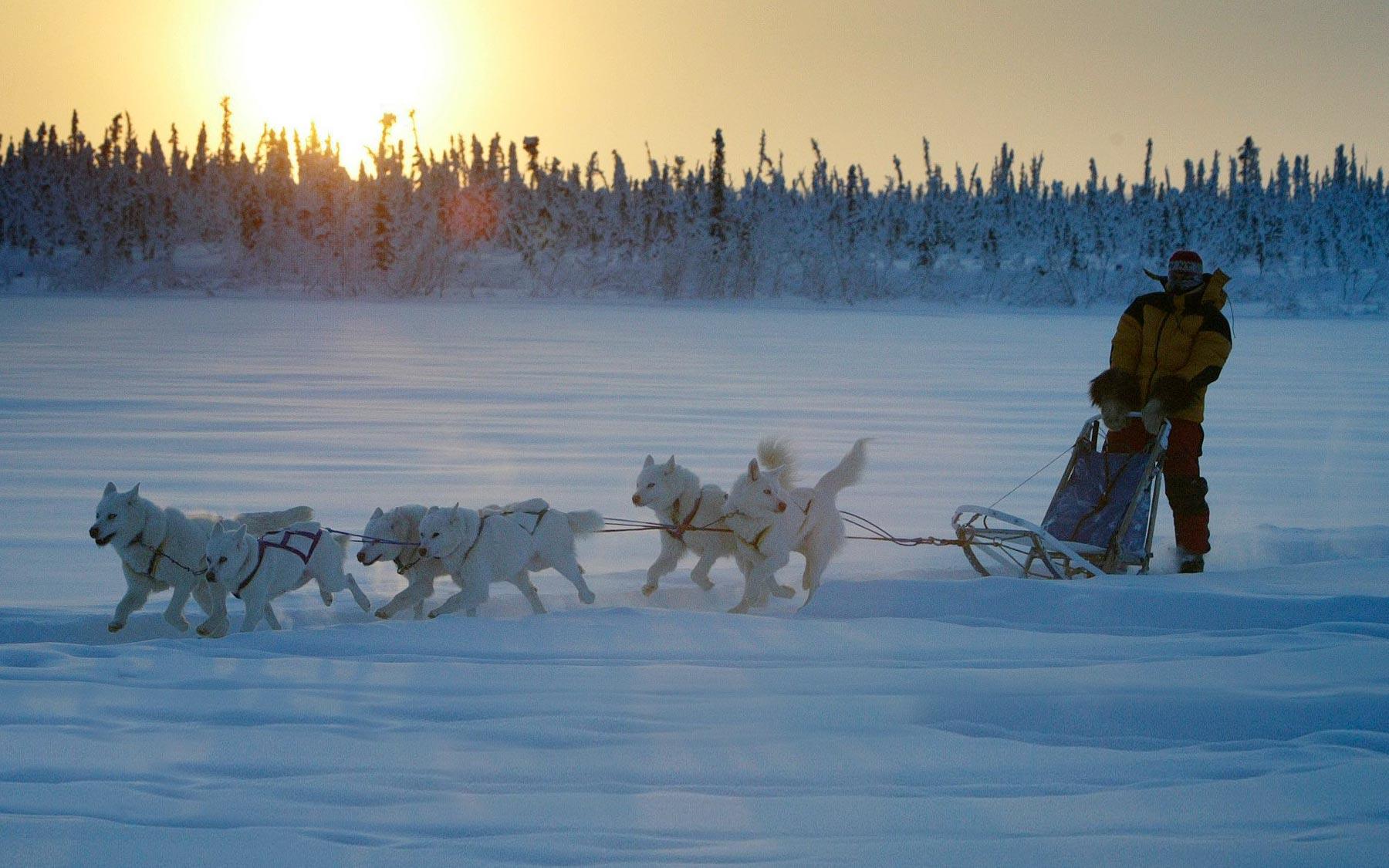 Judi Falsnes on a dogsled near Inuvik.
