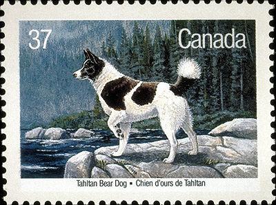 Chien d'ours de Tahltan