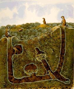 Prairie Dog Habitat