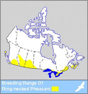 Pheasant Distribution