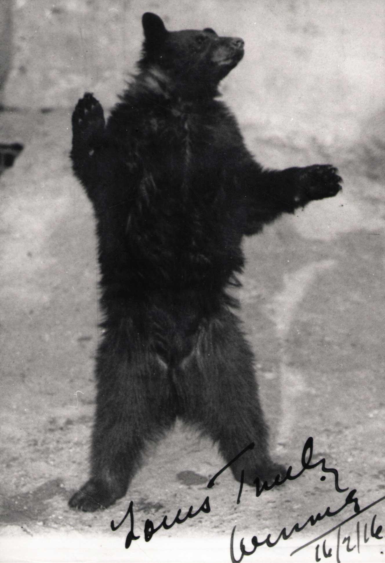 Winnie au zoo de Londres
