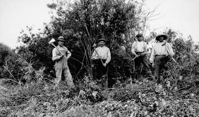 Dutch settlers clearing bush before ploughing new land