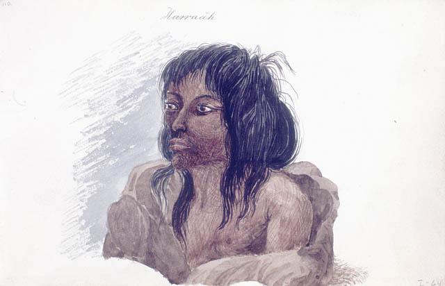 Harraah, Autochtone hare (Sahtú)