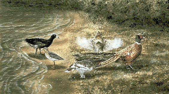 Game Birds
