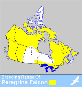 Peregrine Falcon Distribution