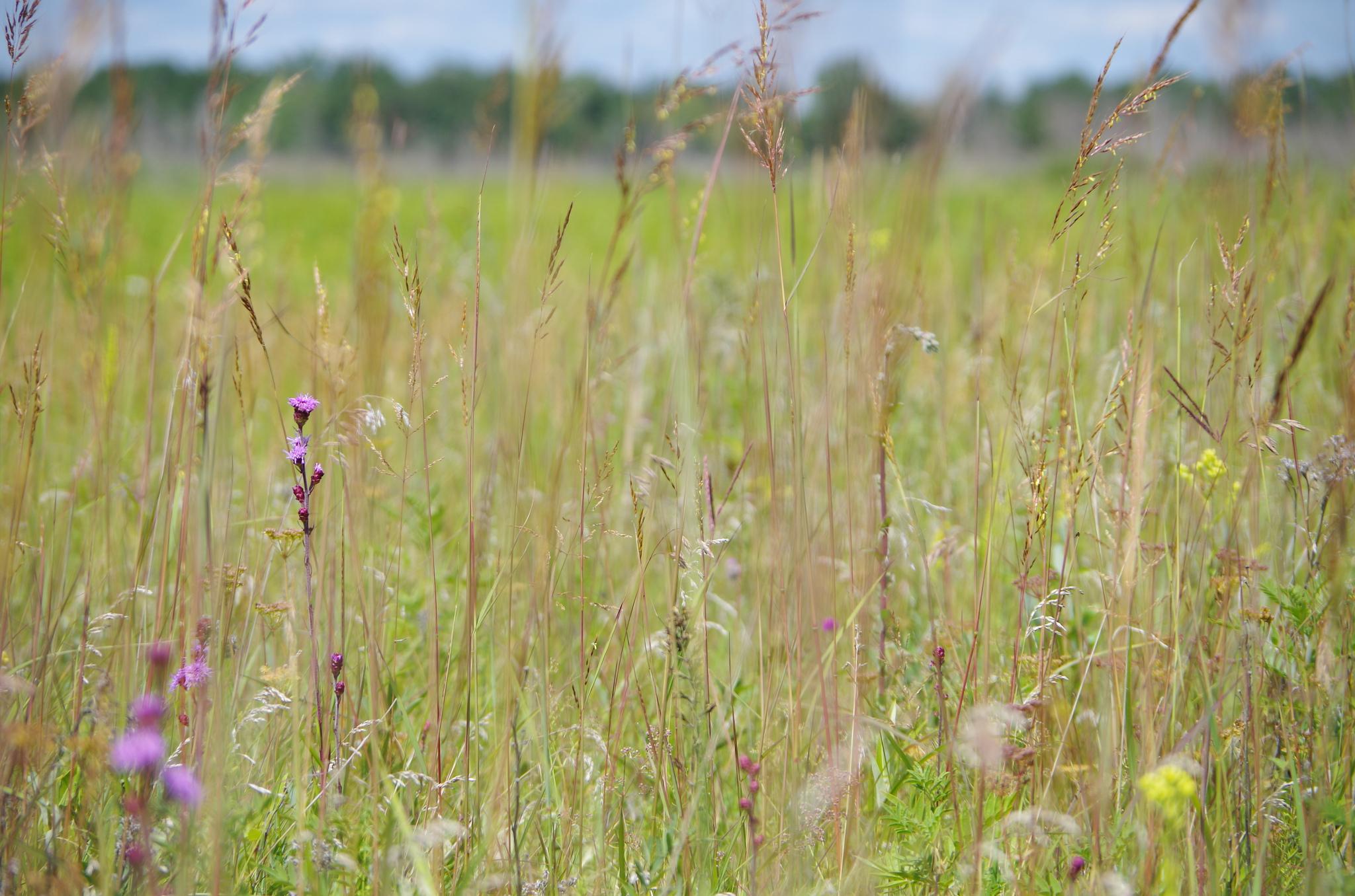 Tall-Grass Prairie Preserve