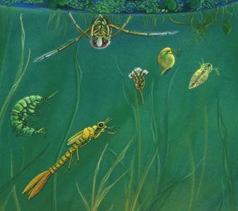 Marais (2), détail de l'écosystème du