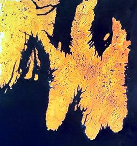 Avalon Peninsula, Satellite Image