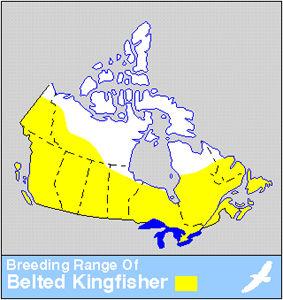 Kingfisher Distribution