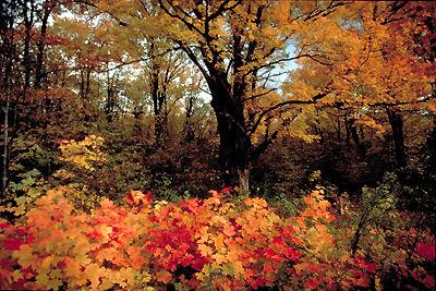 Forêt mixte