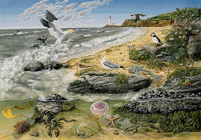 Atlantic Marine Ecosystem