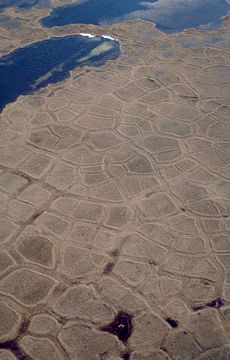 Permafrost Polygon