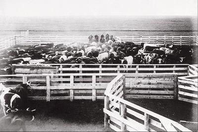 Ranch, 1904