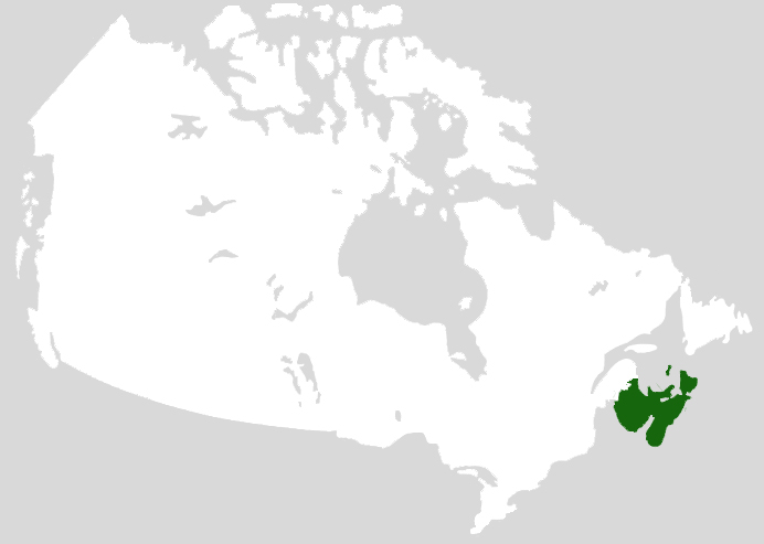 Acadian Forest