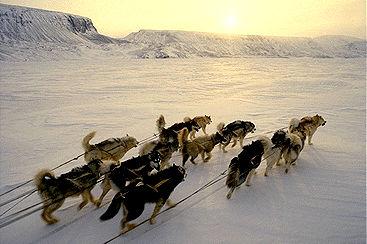 Dog Team on Devon Island