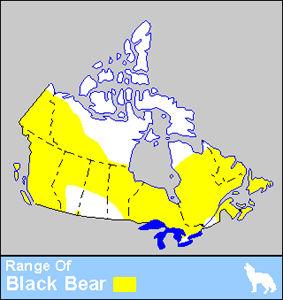 Black Bear Distribution