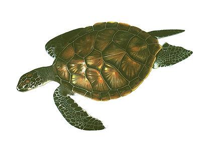 Turtle, Green