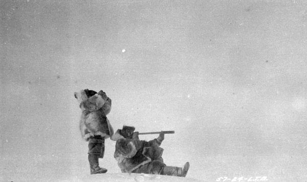 À la recherche des caribous