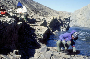 Bathurst, collecting fossils