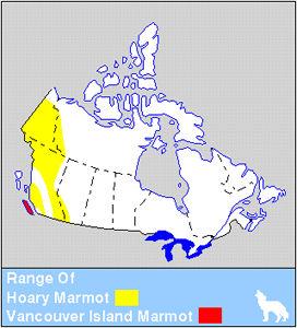 Hoary & Vancouver Island Marmot Distribution