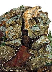 Marmot Burrow