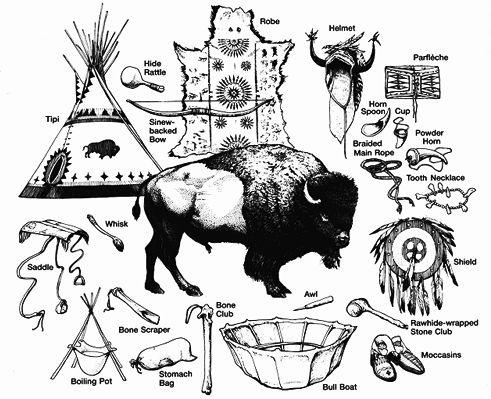 Bison, utilisation du