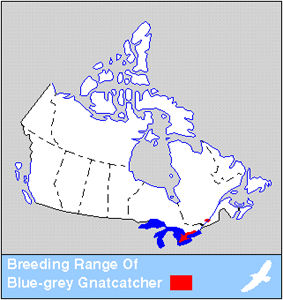 Gnatcatcher Distribution