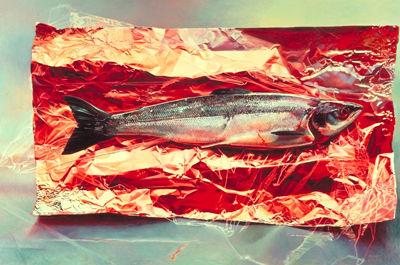 Silver Fish on Crimson Foil