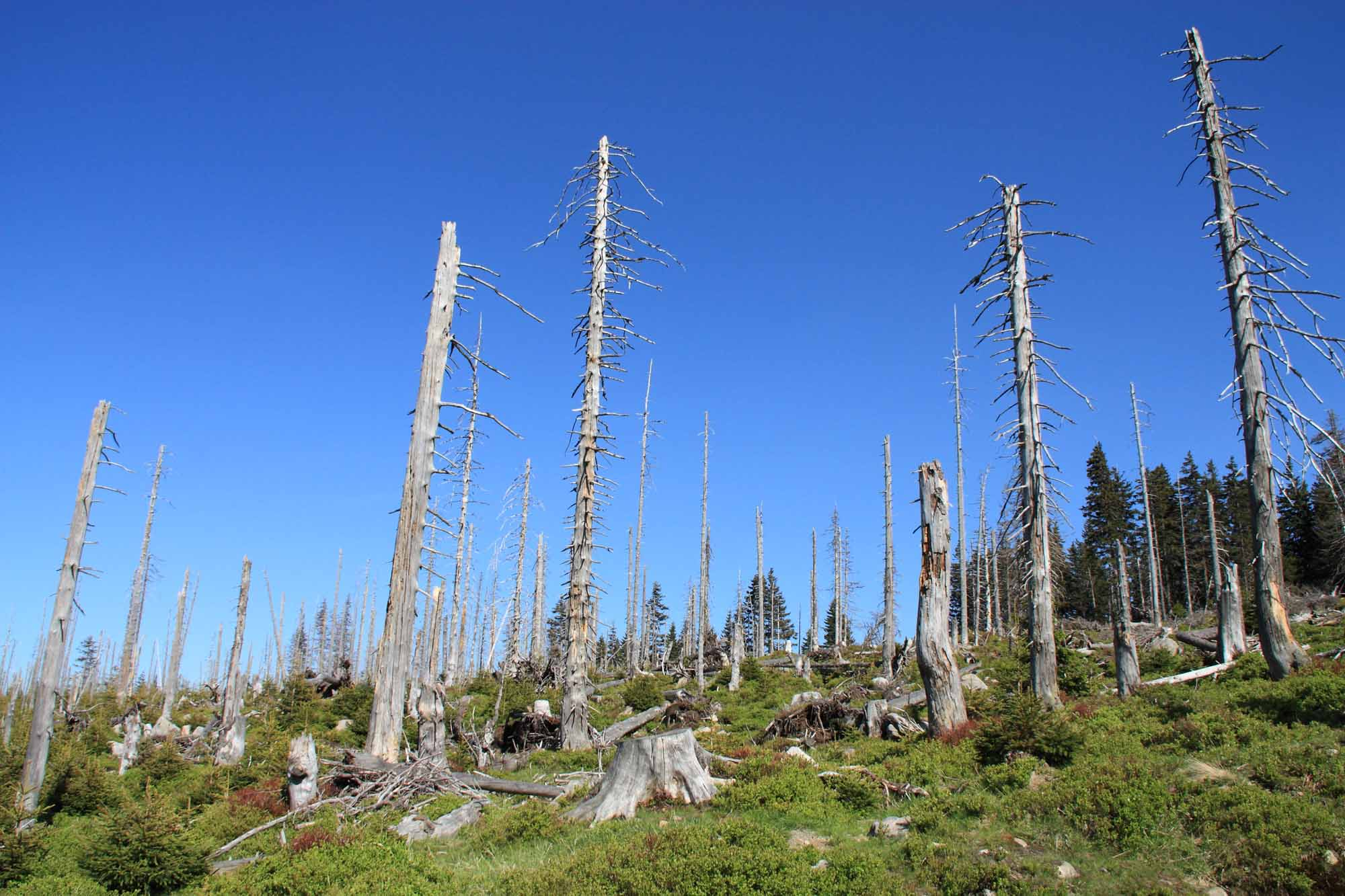 Trees Destroyed By Acid Rain
