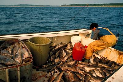 Pêche à la morue