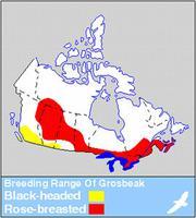 Black-headed & Rose-breasted Grosbeak Distribution