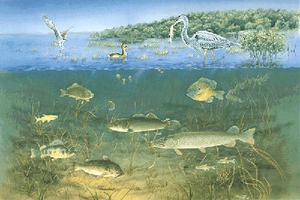 Écosystème du marais (1)