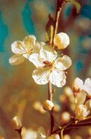 Pollinisation par les insectes