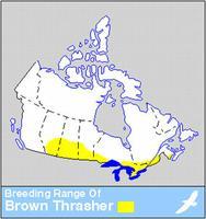 Brown Thrasher Distribution