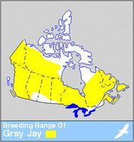 Mésangeai du Canada, répartition du